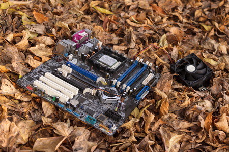 Computer motherboard lies on the ground in foliage
