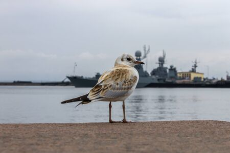 A seagull stands on the embankment of the bay