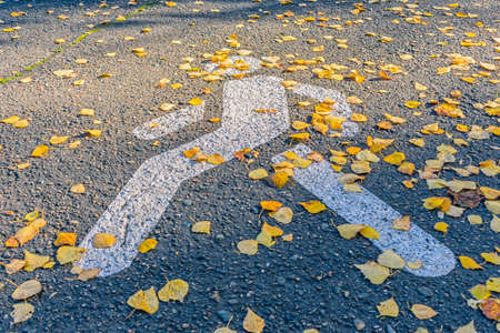 Pedestrian crossing on the road covered with autumn leaves