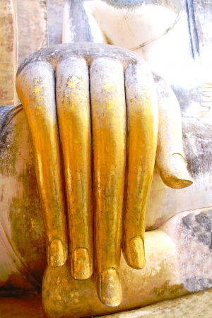 Buddha hand  photo