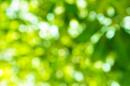 de focus: green bokeh from tree Stock Photo