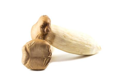 King Oyster Mushroom on white background photo