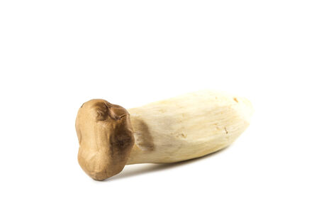 King Oyster Mushroom on white background photo