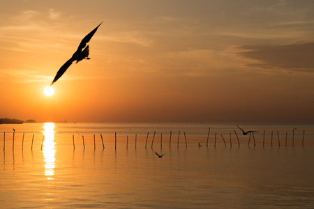 Seagull and the sun