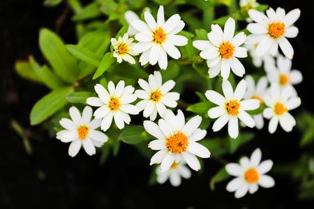 white blossom: White blossom flowers Stock Photo