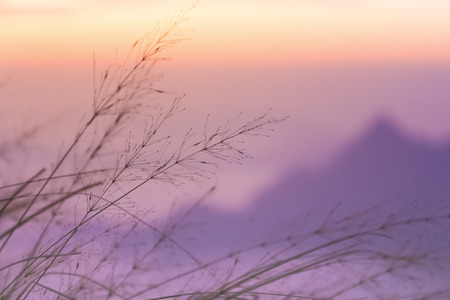 soft peak: Soft focus of the violet mountain with moving grass Stock Photo