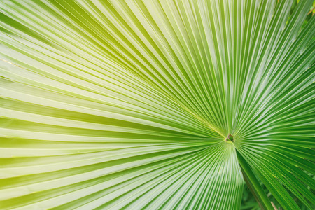 waxy: Big palm leaf in green and yellow color Stock Photo