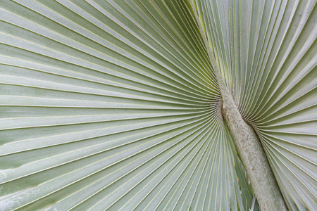 surround: The big palm leaf expand surround from the center