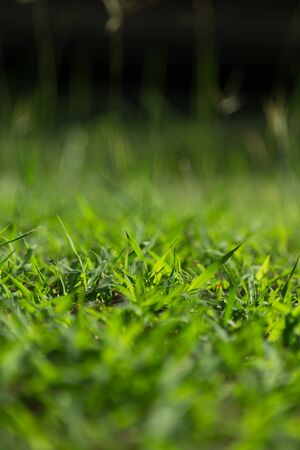 narrow depth of field: Green grass is closed up for narrow depth of field