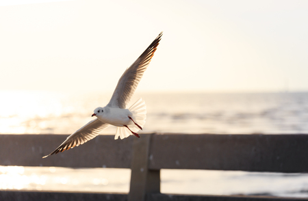 Seagull flying over the bridge close to beach before sunset Stock Photo