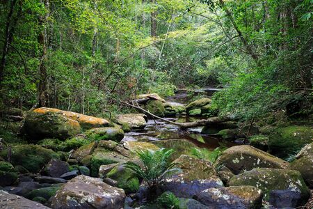 phukradueng: Tropical rainforest in Phukradueng national park of Loei province in Thailand. On the river path no moving water due to drought season in February. Stock Photo