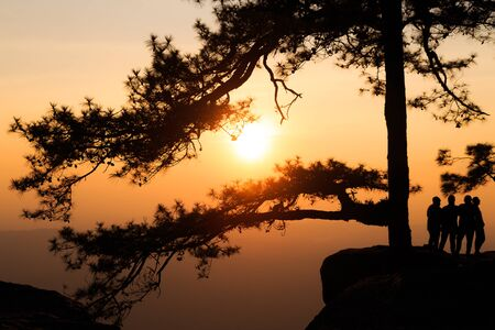 phukradueng: Silhouetted branch of pine tree with travelers on the rock cliff beside during the sunset time at Lomsak cliff at Phukradueng national park in Loei province of Thailand.