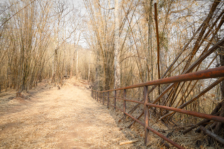 phukradueng: Walking way with iron wall to the mountain inside Phukradueng national park in Loei province of Thailand. The way surround by small bamboo in yellow color.