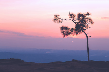 phukradueng: Silhouetted pine tree on the Pha Lomsak cliff popular view point in Phukradueng national park of Loei, Thailand. This time was golden hour of colorful sky after sunset. Stock Photo