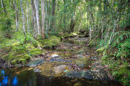 River in the rain forest lack of water flow due to summer. The stones under the river path are appear. Stock Photo