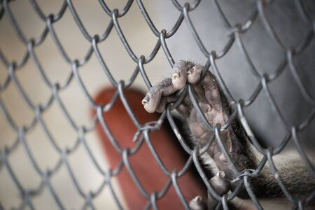 imprison: Abstract of imprison from close focus on monkeys hand touching iron cage Stock Photo