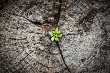 Close focus on small green tree grow from cracking area of dying wood in dark tone color Stock Photo