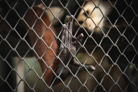 imprison: Abstract of imprison from close focus on monkeys hand touching iron cage in dark tone color Stock Photo
