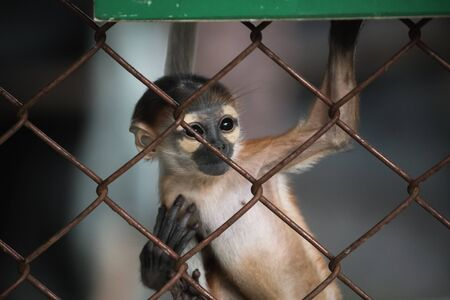 imprison: Abstract of imprison from close focus on young monkey climbing on iron cage in dark tone color Stock Photo