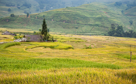pa: Green and yellow rice terraces surrounded by mountain at Lao Chai village of Sa Pa, Vietnam Stock Photo