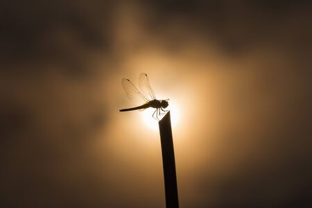 center position: Silhouette dragonfly on stick in center position of blurry sun and cloud as background in low key tone. Stock Photo
