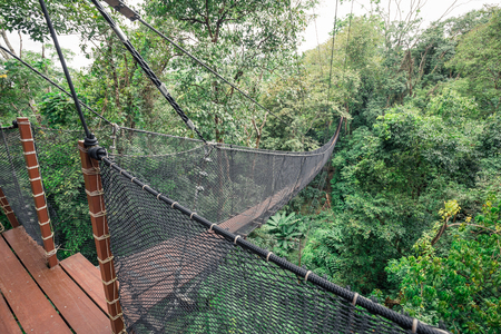 sight seeing: Wooden bridge and balcony connecting between big tree for sight seeing on top tree of tropical forest. Bridges wall made by nylon net.