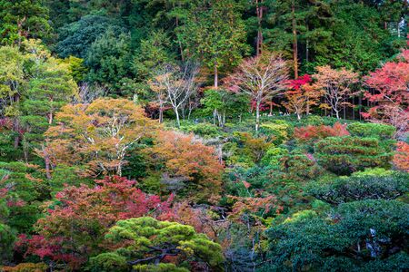 Kyoto, Japan - November 19, 2018: Tourist stop on hill to take photo in colorful park, tree change color during autumn and winter. Editorial