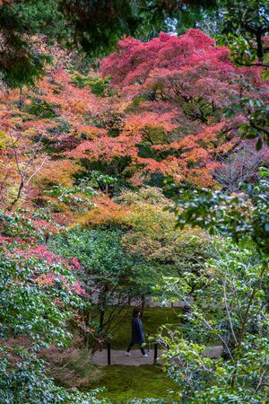Kyoto, Japan - November 19, 2018: Tourist walking through colorful park covered by tree change color during autumn and winter.