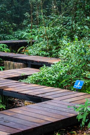 Wooden devious walkway for sight seeing on slope ground inside tropical rainforest covered by green trees and bushes.