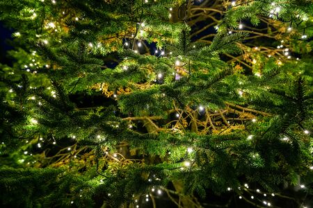 Dark scene of green tree decorated by small lights on branches.