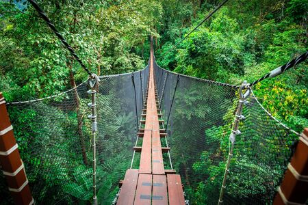 Wooden bridge over top of tree for adventure walking and sight seeing inside tropical forest. Bridge covered by black net and sling as wall.