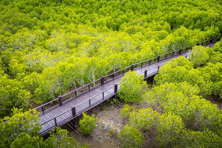 Aerial view over wooden walkway inside tropical mangrove forest. Banco de Imagens