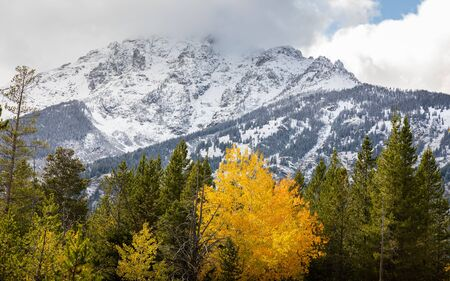 Mountain range covered by snow and cloud inside forest during autumn of Grand Teton National Park, Wyoming, USA.