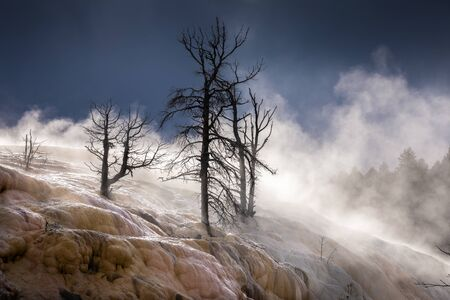 Dying trees on terrace of Mammoth hot spring covered by smoke from hot water, Yellowstone National Park, Wyoming, USA.