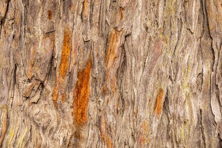 Close focus on texture of old hardwood tree, rough bark damage and cracking out from trunk. Фото со стока
