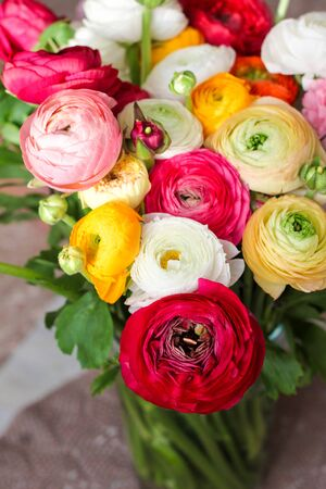 RANUNCULUS BULBOSUS, spring colorful bunch of flowers, womens day postcard concept, toned.
