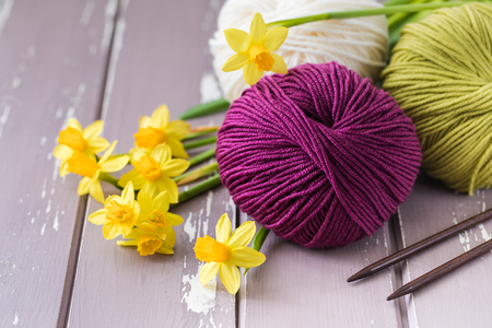 Spring colorful wool yarn with knitting needles and yellow daffodils. With a copyspace.