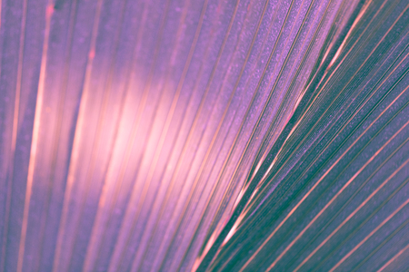 Palm leaves in ultraviolet tone, selective focus, background concept