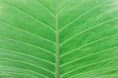 Palm leaves in vintage tone, selective focus, background concept