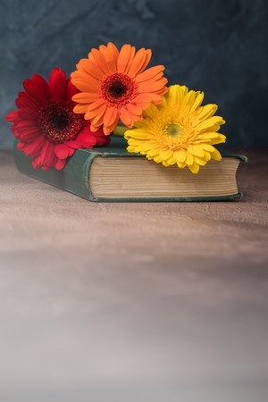 Autumn back to school postcard concept, old book, daisies, toned