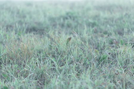 Background with wet morning grass, selective focus, toned