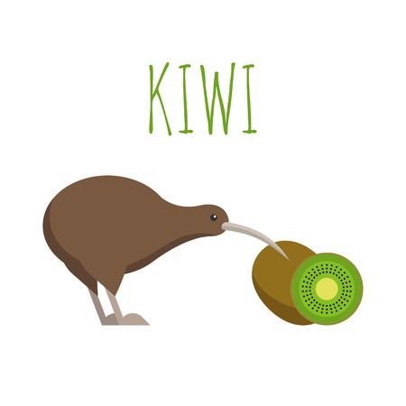 Vector illustration of kiwi bird and kiwi fruit