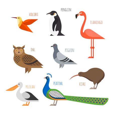 Vector set of Colorful bird icons. Owl, hummingbird, pigeon and penguin
