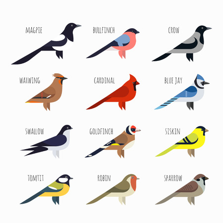 Vector set of Colorful bird icons. Cardinal, magpie, sparrow and swallow Vettoriali