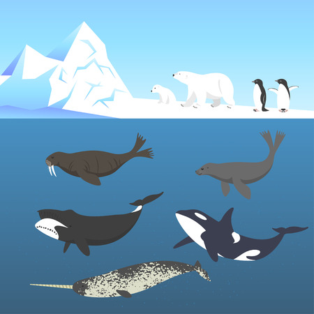 orca: Vector set of animals living in a cold climate. Polar bear, penguin, bowhead whale, walrus, narwhal, seal, killer whale or orca.
