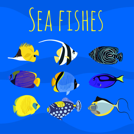 triggerfish: Vector set of sea exotic ocean tropical colorful fishes.