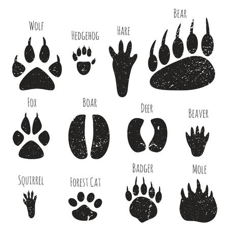 Vector set d'animaux forestiers empreintes.