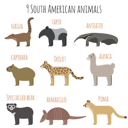 spectacled: Vector set of South American animals icons. Anteater, tapir, armadillo, capybara. Flat style.