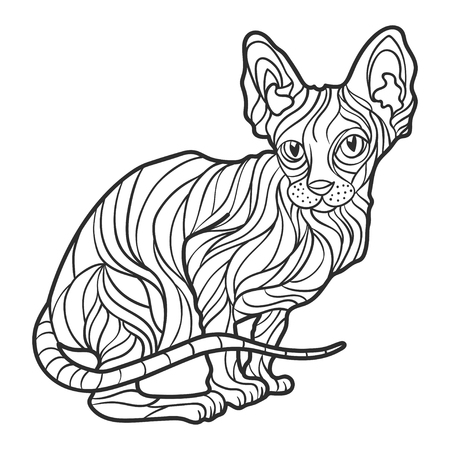 Vector monochrome hand drawn illustration of sphynx cat. Coloring page with high details isolated on white background. Boho style. Design for T-shirt, greeting card or poster.