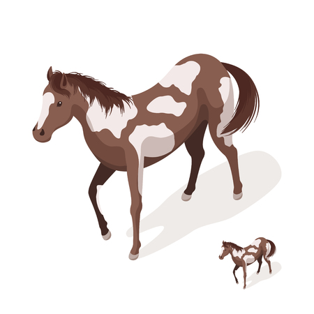 Isometric 3d vector illustration of pinto horses. Icon for web. Isolated on white background. Illustration